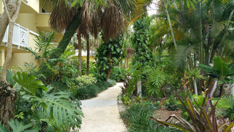 Jungle in the Courtyard